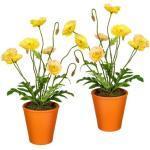 Creativ green kunst-potplanten in aarden pot (set van 2) (2 stuks)