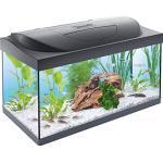 Tetra 256989 Starter Line Aquarium Complete Set, Met LED-Verlichting, Stabiele 54 Liter, Voer En Onderhoudsmiddelen, Zwart, 60 x 30 x 30 cm